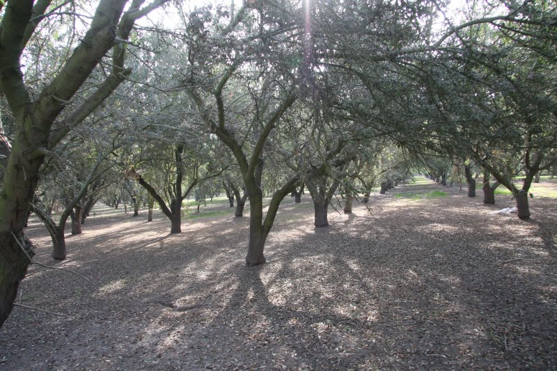 Tree Shaker Pads